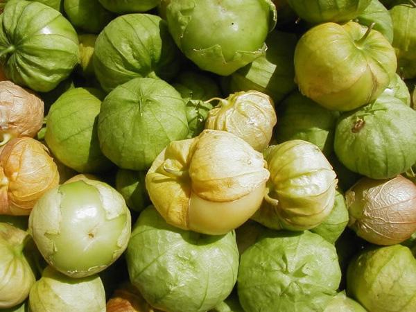 pomidor-tomatilio