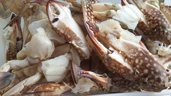 Как правильно варить тушки и щупальца кальмаров