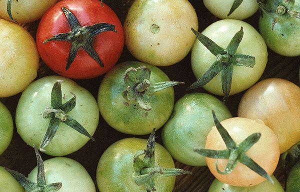 kak-sohranit-pomidory-na-zimu-4