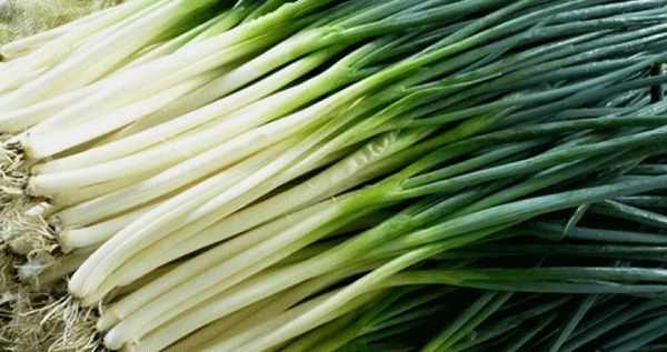Как хранить зелёный лук в домашних условиях долго