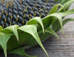 Как вкусно пожарить сырые тыквенные или подсолнуховые семечки