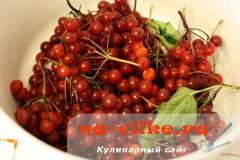 Калина ягода