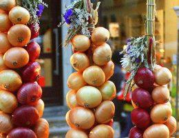 Как сохранить репчатый лук после сбора урожа