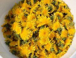 Цветки одуванчиков
