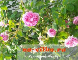 Чайная роза для варенья
